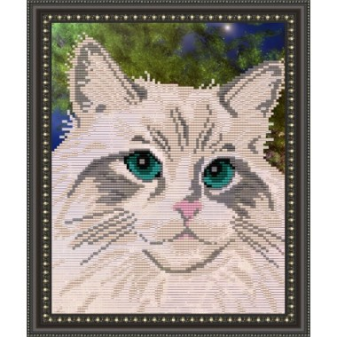 VKA-4332 Білий кіт
