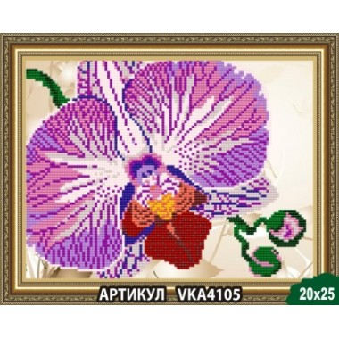 VKA4105 Орхідея