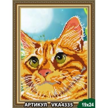 VKA4335 Рудий кіт