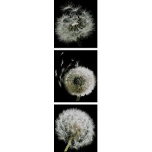 """Картина з бісером СЛТ-2203 """"Подих вітру"""""""