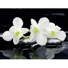 """F-044 """"Біла орхідея"""" - ТМ SvitArt"""