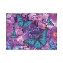 А3-К-570 Метелики